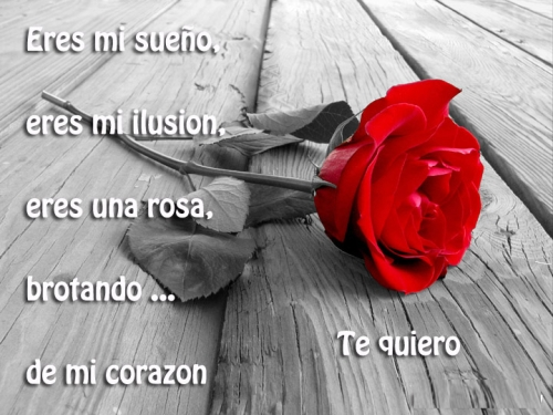 poema imagen rosa roja Poemas de Amor para Compartir