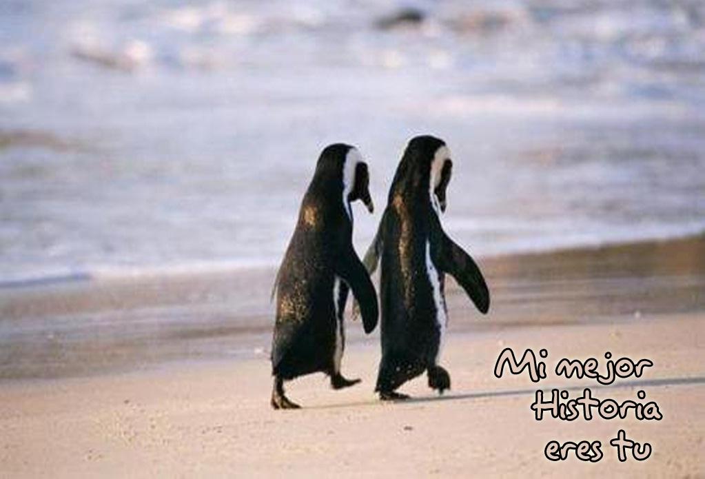 pinguinos Mi mejor historia de amor