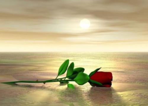 rosa paisaje de amor  imágenes románticas de playa