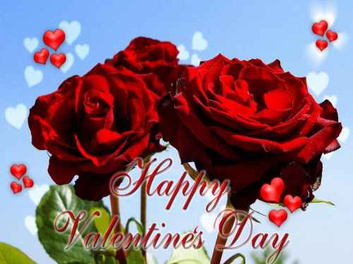 rosas de san valentin Imagenes de Rosas para San Valentín