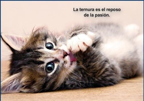 gatito en celo Imágenes lindas de gatitos con frases
