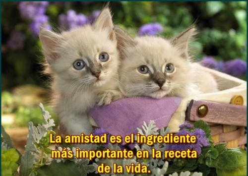 postales de amistdad lindos gatitos para facebook s Imágenes lindas de gatitos con frases