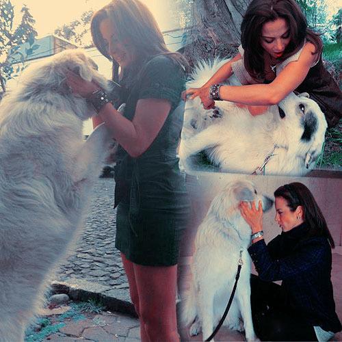 imagenes de amor con mascotas
