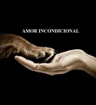 imágenes de amor con mascotas