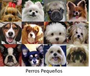 perros_pequeños