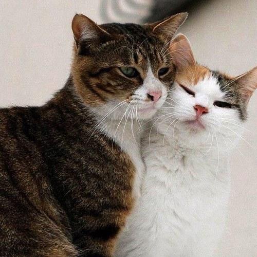 imágenes de amor con gatos